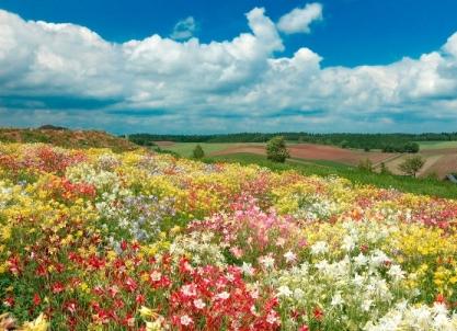 富良野の綺麗で美しい花畑