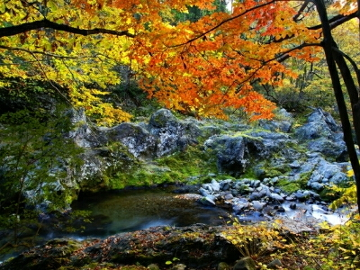 白神山地の画像 p1_27